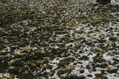Monde de la glace - pommes congelées au sol image stock