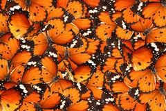 Monde de magie de papillons Image libre de droits