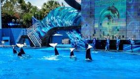 Monde de mer de baleines d'orque Photo stock