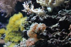Monde de mer, macro photographie, algues, coraux, récif, photographie stock libre de droits