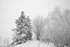 Monde de neige Image stock