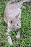 Monde des chats Image stock