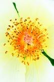 Monde différent en fleur Photos libres de droits