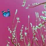 Monde magique de nature Photo libre de droits