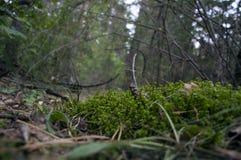 Monde minuscule dans la forêt Photo libre de droits