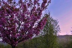 Monde rosâtre et nature de Slovaquie photographie stock