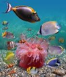 Monde sous-marin Photos stock