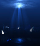 Monde sous-marin Photos libres de droits