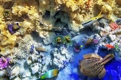 Monde sous-marin avec des coraux et des poissons tropicaux image libre de droits