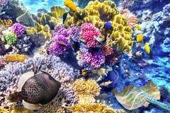 Monde sous-marin avec des coraux et des poissons tropicaux photo libre de droits