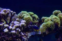 Monde sous-marin avec les algues lumineuses photo libre de droits