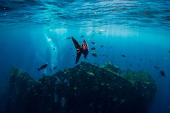 Monde sous-marin avec les poissons et le naufrage tropicaux dans Bali photographie stock