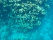 Monde sous-marin de la Mer Rouge en Egypte Photographie stock libre de droits