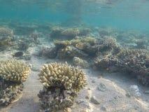 Monde sous-marin de la Mer Rouge en Egypte Photographie stock