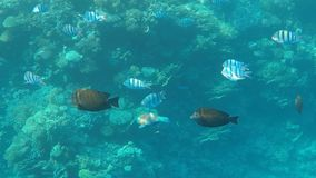Monde sous-marin de la Mer Rouge en Egypte clips vidéos