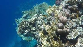 Monde sous-marin de la Mer Rouge en Egypte banque de vidéos