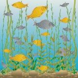 Monde sous-marin de rivière ou de lac photo libre de droits