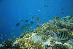 Monde sous-marin des poissons photo stock
