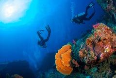 Monde sous-marin merveilleux avec des plongeurs autonomes sur le récif coralien et l'a images stock