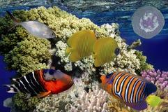 Monde sous-marin merveilleux et beau avec des coraux et le tropica Image stock