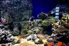 Monde sous-marin Oceanarium à Moscou Moskvarium Photographie stock