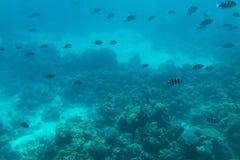 Monde sous-marin Poissons sur le récif coralien Photos libres de droits