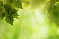 Monde vert Photo stock