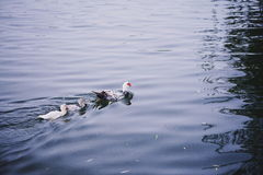 Mondego河 库存图片