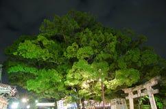 Mondfestival Mozu Hachimangu Schrein Stockbild