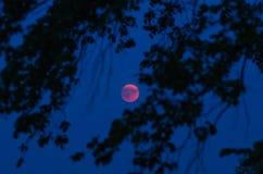 Mondfinsternis durch die Schattenbilder von Baumasten Lizenzfreies Stockfoto