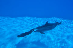 Mondial Record In Freediving - Simone Arrigoni Stock Photography