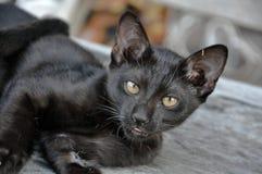 Mondo dei gatti neri Immagini Stock Libere da Diritti