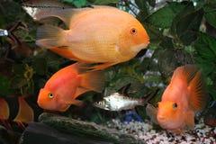 Mondo del pesce Fotografia Stock