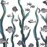 Mondo del ‹del †del ‹del †del mare Immagini Stock Libere da Diritti
