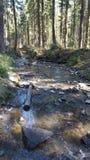 Mondo del fiume fotografie stock libere da diritti