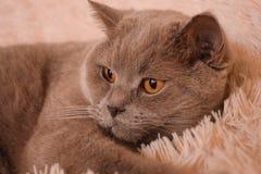 mondo del gatto Fotografia Stock Libera da Diritti