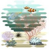 Mondo del mare Due pesci del pagliaccio fotografia stock libera da diritti