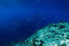 Mondo del mare in subacqueo con scuola del pesce tropicale in oceano alla barriera corallina fotografia stock libera da diritti