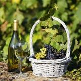 Mondo del vino Fotografia Stock Libera da Diritti