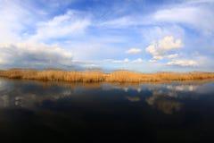 Mondo dell'acqua Fotografia Stock