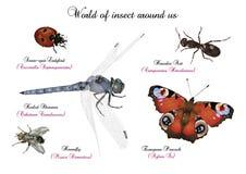 Mondo dell'insetto intorno noi Immagini Stock