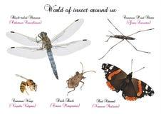 Mondo dell'insetto intorno noi royalty illustrazione gratis