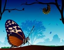 Mondo della farfalla Fotografia Stock Libera da Diritti