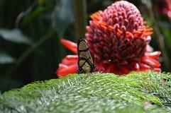Mondo della farfalla Fotografie Stock Libere da Diritti