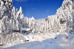 Mondo della neve Immagine Stock Libera da Diritti