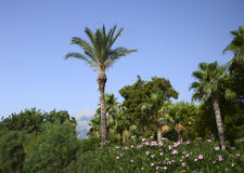 Mondo della vegetazione di Kemer Fotografia Stock Libera da Diritti