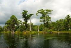 Mondo di fauna selvatica lungo il fiume di Wakulla, Florida, U.S.A. Immagini Stock