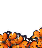 Mondo di magia delle farfalle Immagini Stock Libere da Diritti