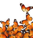 Mondo di magia delle farfalle Fotografia Stock