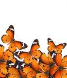 Mondo di magia delle farfalle Fotografia Stock Libera da Diritti